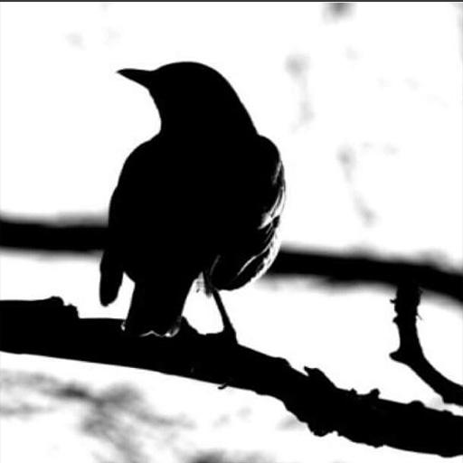 Blackbird Boutique Logo