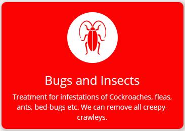 bugs-fs8