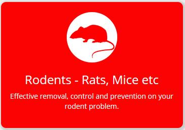 rats-fs8